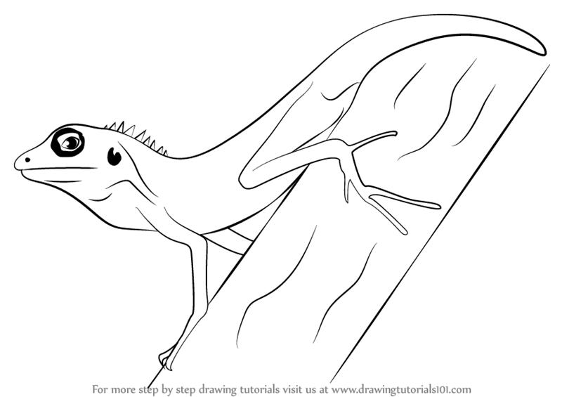 Drawn reptile lizzard Lizard Lizard Learn How