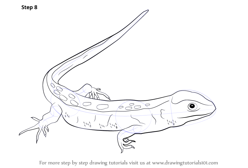 Drawn reptile lizzard The by details required Drawing