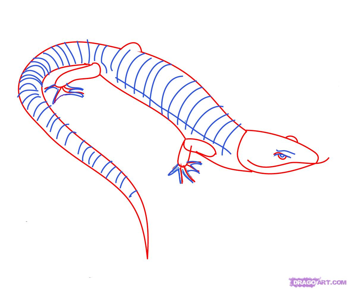 Drawn reptile lizzard Step Step 2 How FREE