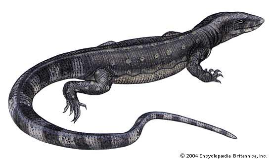 Drawn reptile monitor lizard Lizards Dangerous water com 7