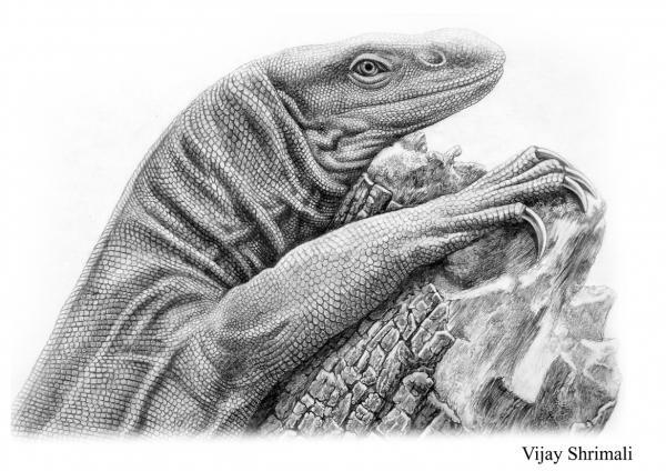 Drawn reptile monitor lizard Monitor Pinterest monitor monitor lizard