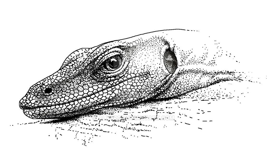 Drawn reptile monitor lizard By Lizard Resting Lizard on