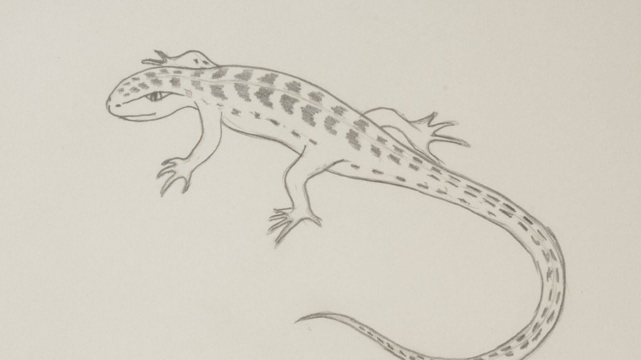 Drawn reptile pencil drawing A Draw Pencil YouTube Guidecentral