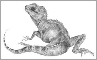 Drawn reptile pencil drawing Portraits pet drawings Portraits pets