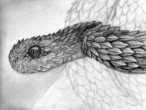 Drawn reptile pencil drawing Step snake to Atheris viper