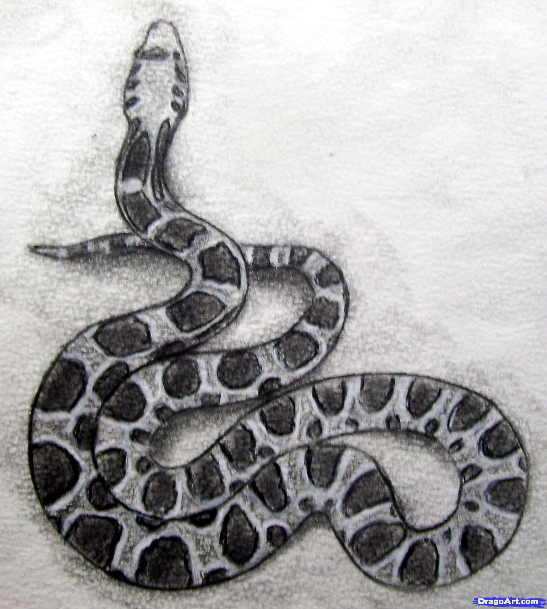 Drawn reptile pencil drawing To How Realistic Snake 8