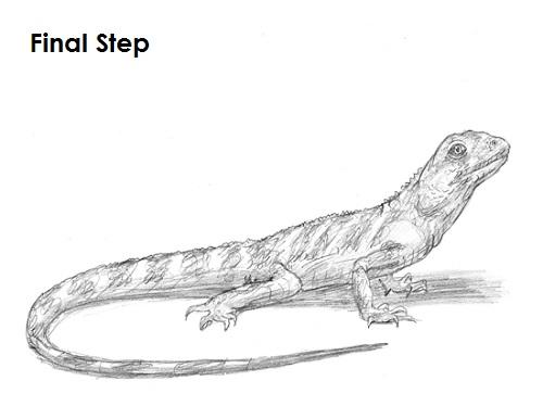 Drawn reptile pencil drawing Lizard Draw a Draw to