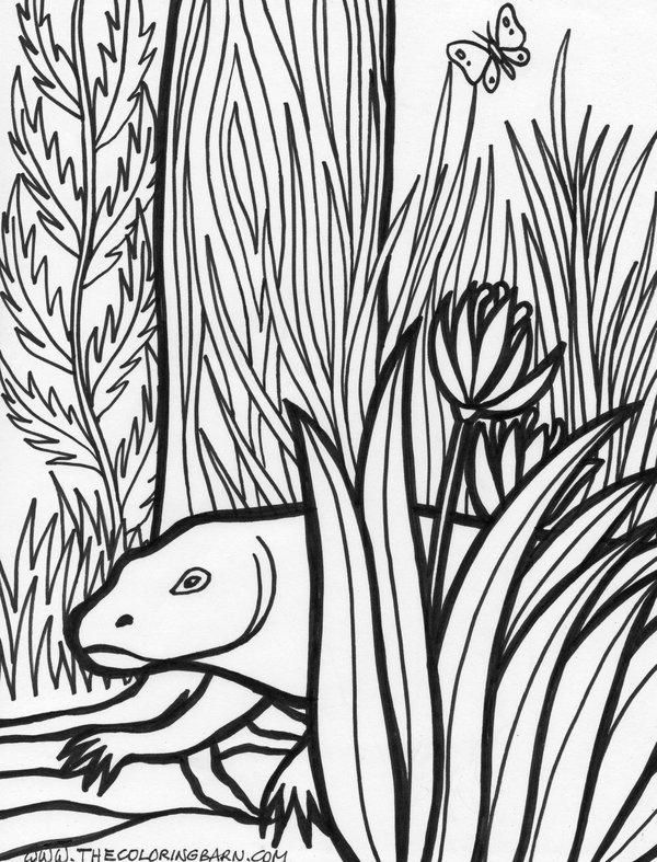Drawn reptile rainforest animal 26 Reptiles Coloring Reptiles RainForest