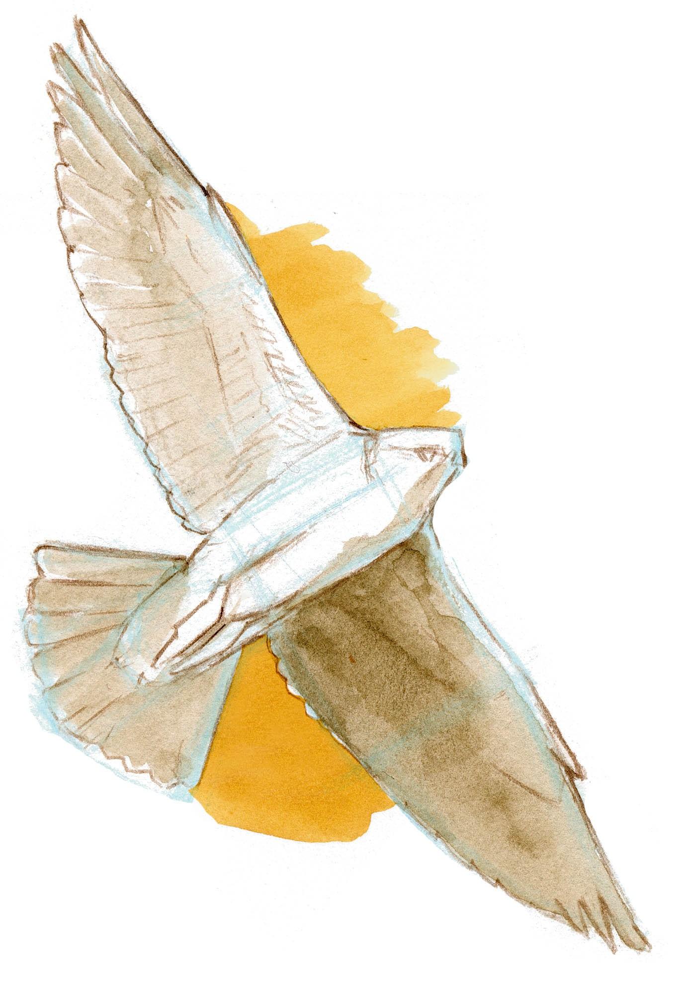 Drawn reptile raptor bird In To Draw Birds Flight