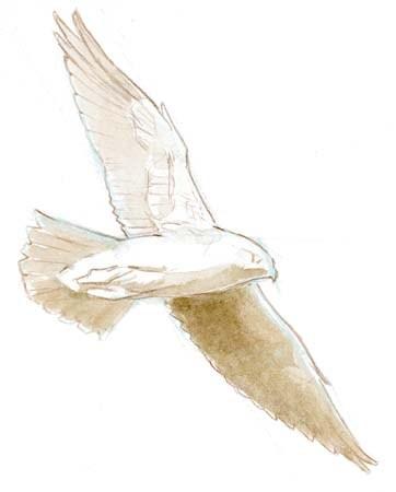 Drawn reptile raptor bird 9 9 raptor shape John
