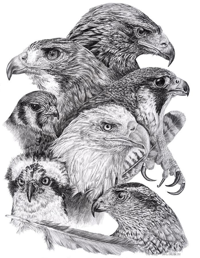 Drawn reptile raptor bird By Craig Raptor Montage by