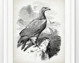 Drawn reptile raptor bird Eagle Eagle Print Eagle Poster