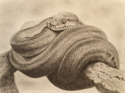 Drawn reptile realistic To draw How  anything