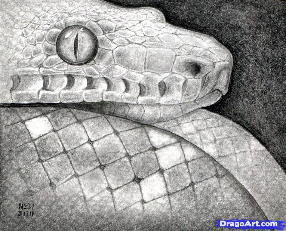 Drawn reptile realistic 16 head snake how draw