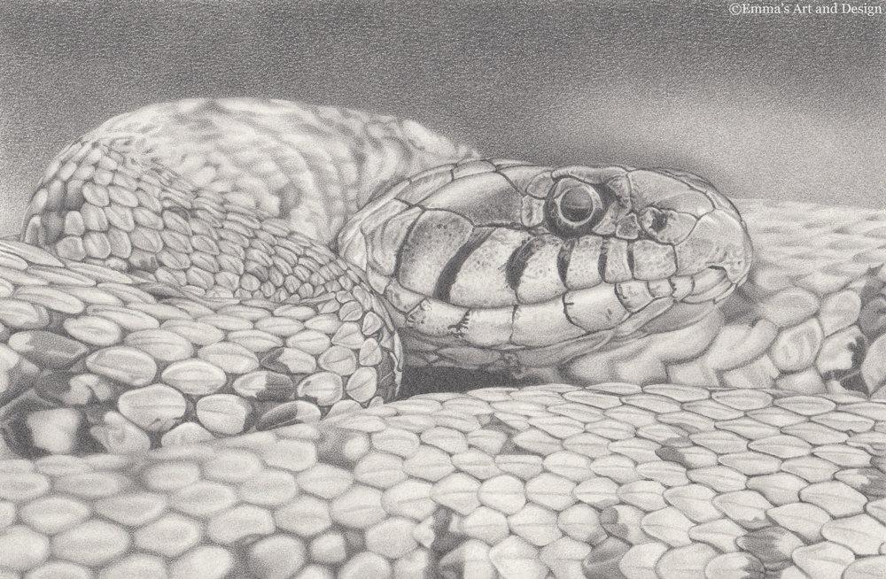 Drawn snake realistic Of snake original Grass Snake