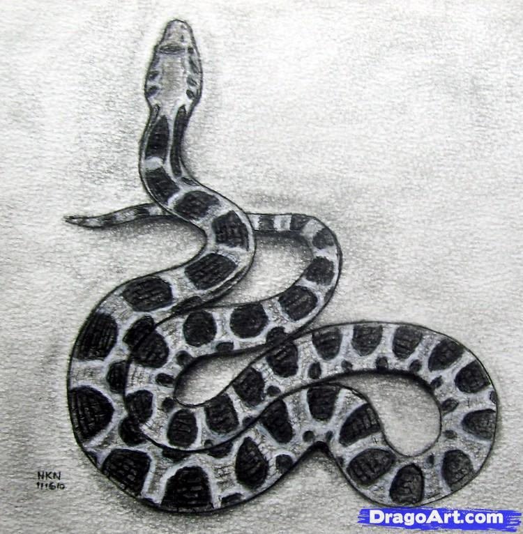 Drawn reptile realistic Pattern for realistic how draw