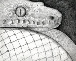 Drawn reptile realistic 15 Step Snake How draw