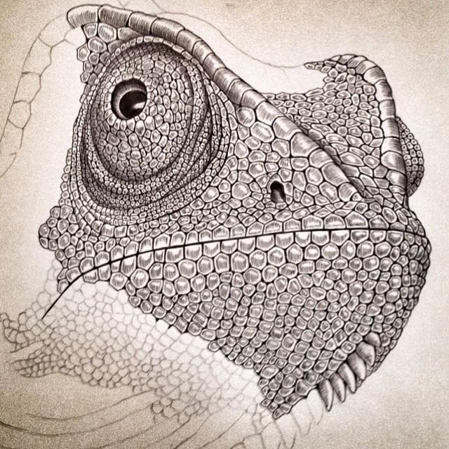 Drawn reptile reptile Away drawing — I'm my