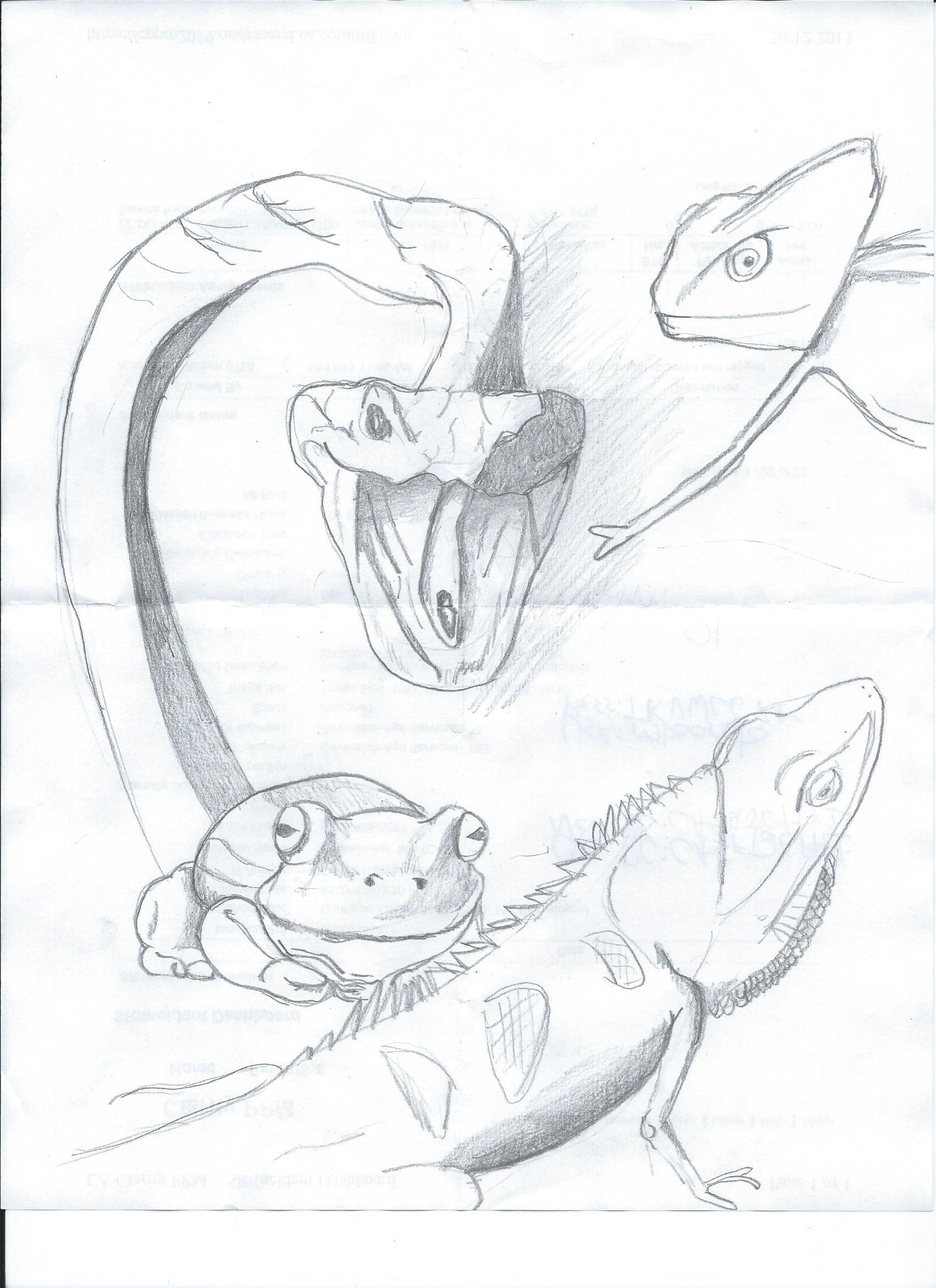Drawn reptile reptile 2nd Reptiles everywhere reptiles :