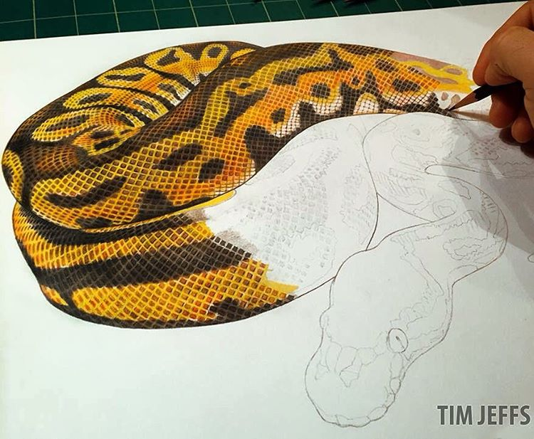 Drawn reptile reptile Ball #ballpythons Slithering #python Slithering