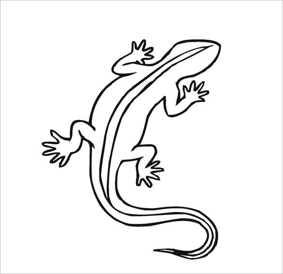 Drawn reptile salamander Colouring & Lizard & Free