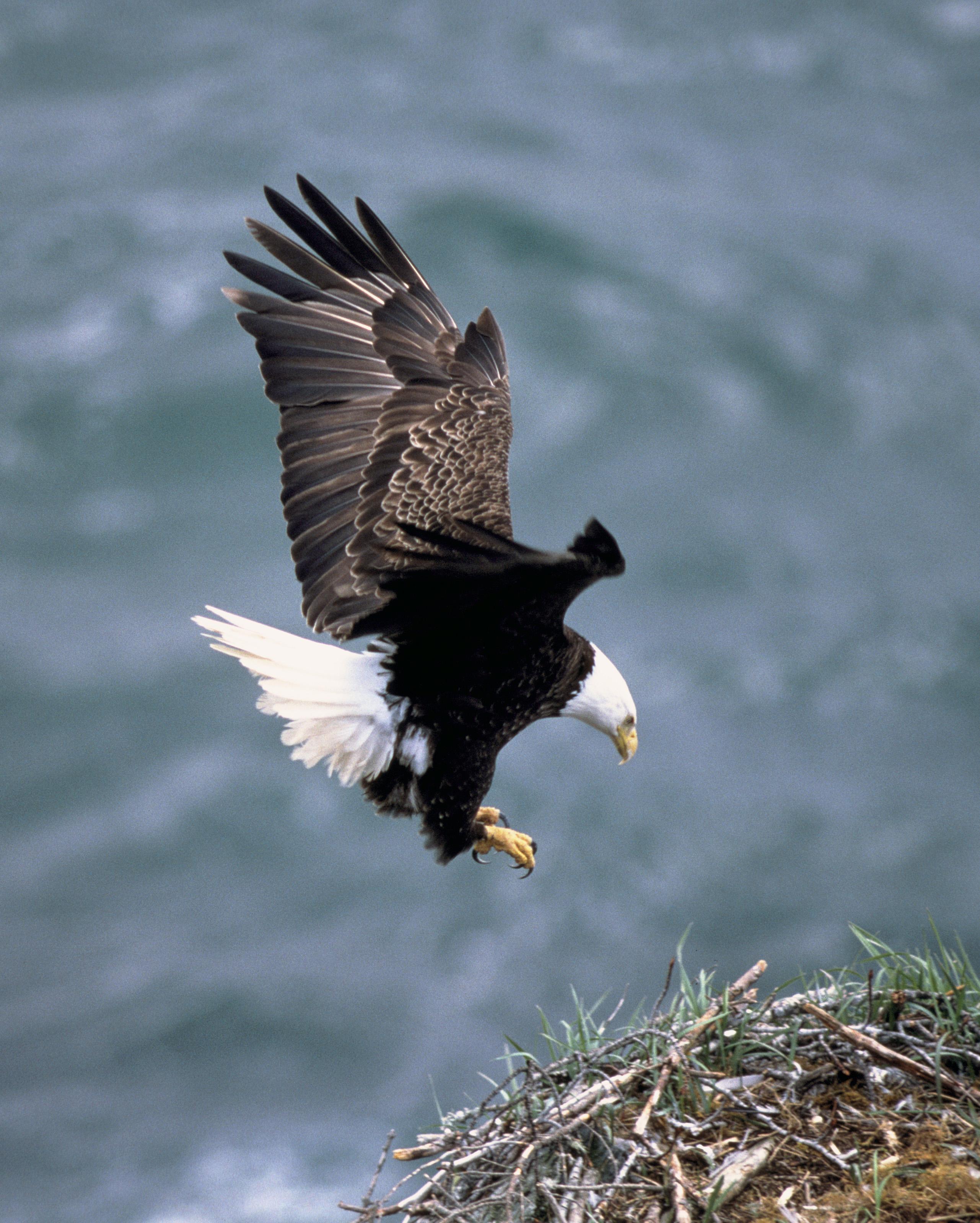 Drawn reptile sea eagle ANIMALS SPECIES S Eagle The