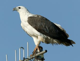 Drawn reptile sea eagle Bellied animals 711 White images