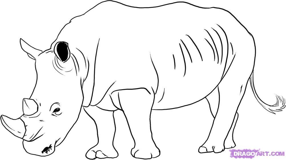 Charging Rhino clipart Rhinoceros photo#14 Cute Cute Drawing