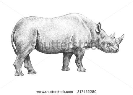 Drawn rhino african animal On hand sketch endangered hand