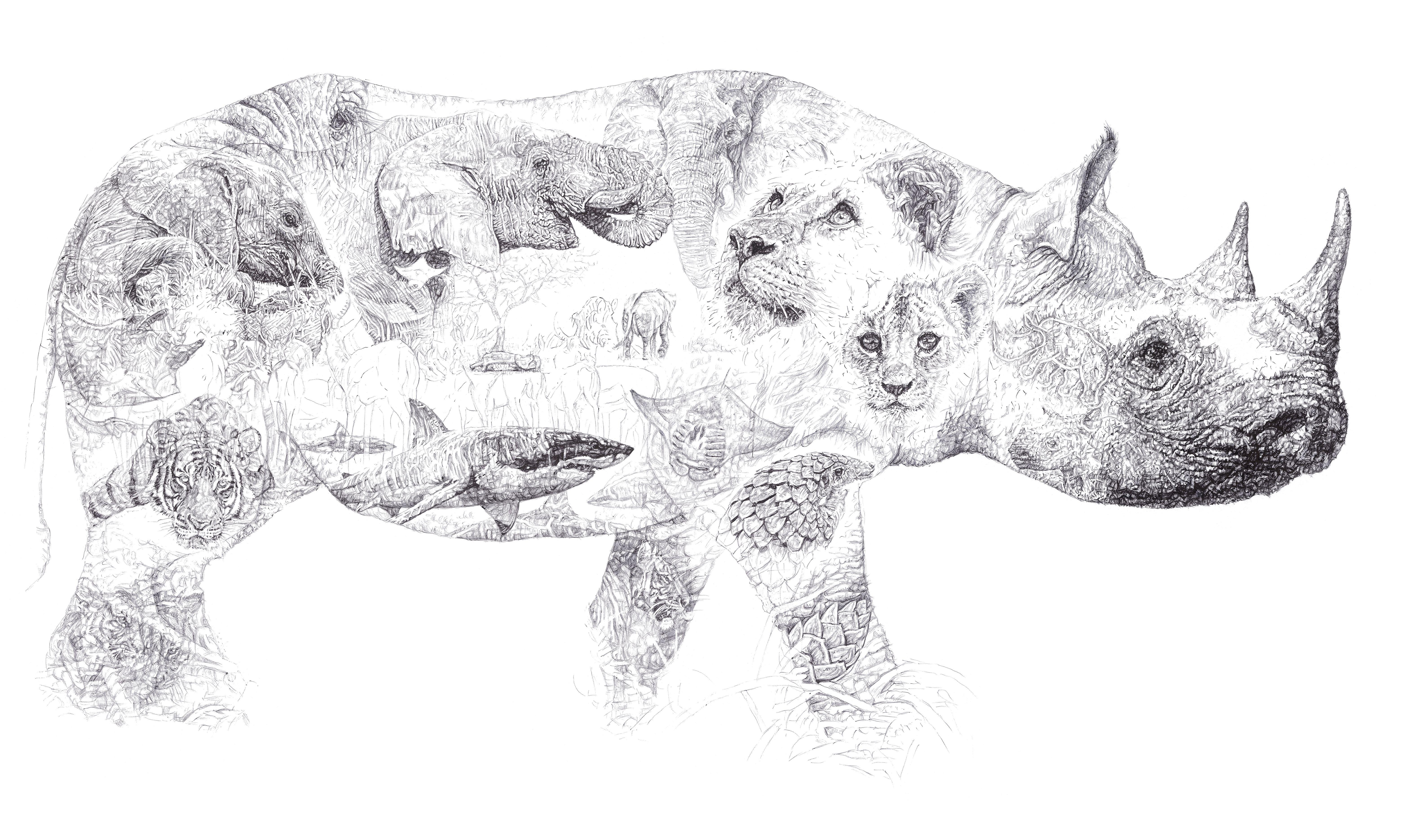 Drawn rhino african animal In Lee Attenborough McCracken 'Africa'