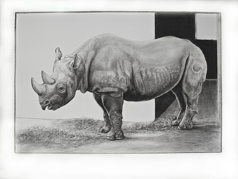 Drawn rhino african rhino African A Bestiary Peter A