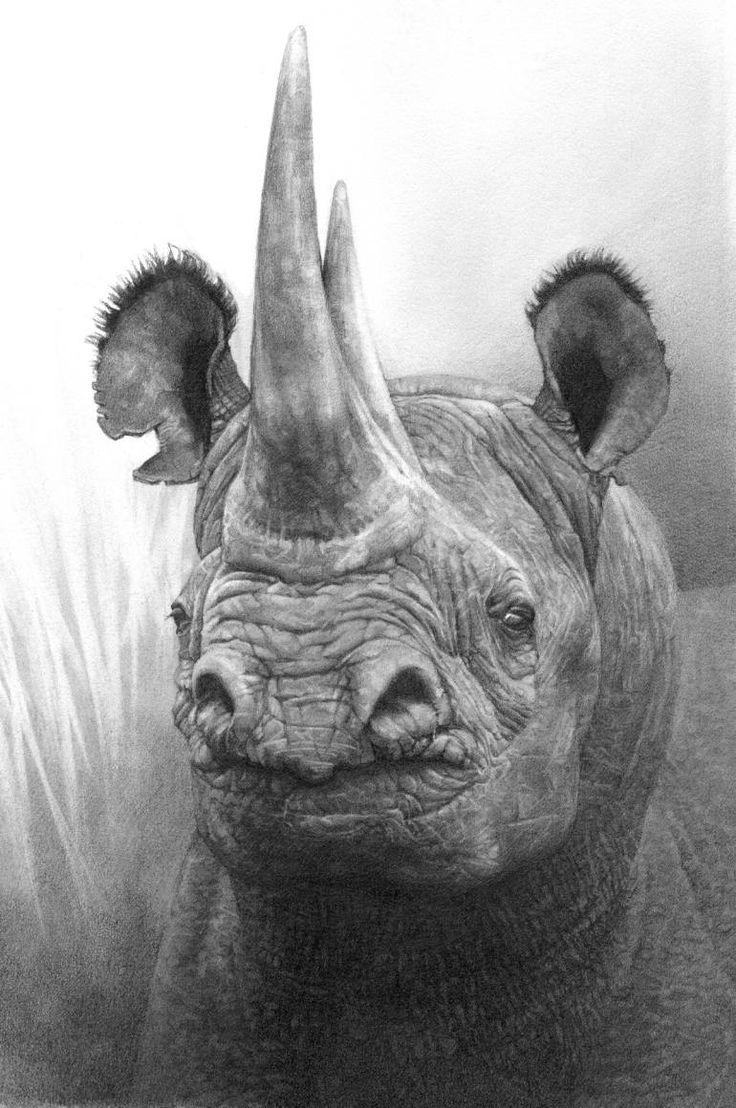 Drawn rhino african rhino Best African Black Rhino ideas