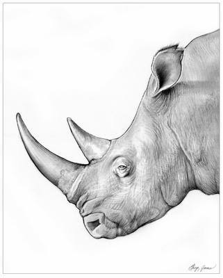 Drawn rhino african rhino Greg Rhino Drawing 101 RHINOCEROUS