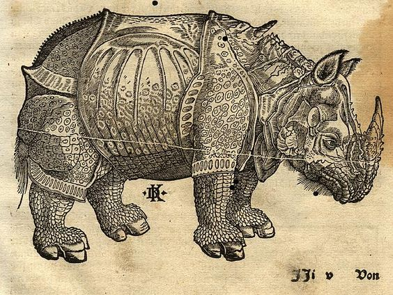 Drawn rhino albrecht durer By favorite print Northern