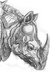 Drawn rhino albrecht durer Rhinoceros on Dürer's di more