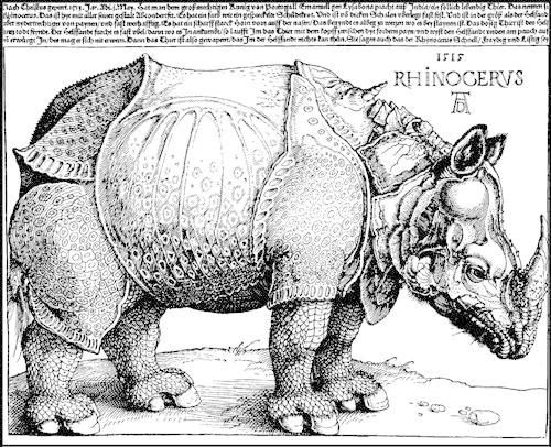 Drawn rhino albrecht durer GERMANY: seen of broadside a