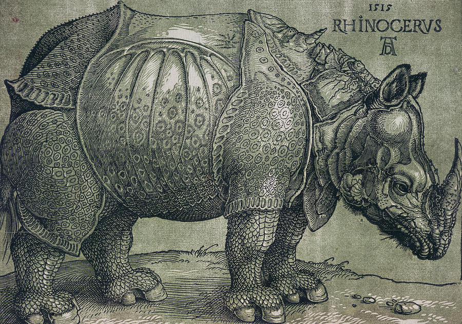Drawn rhino albrecht durer Durer Albrecht Durer Drawing by