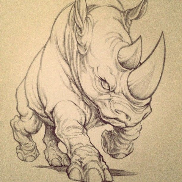 Drawn rhino angry From 25+ do Best scenes