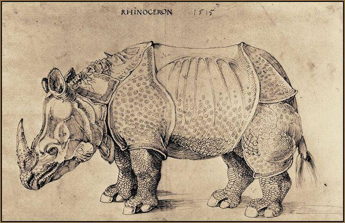 Drawn rhino armored From Photos