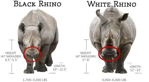 Drawn rhino battle White Fight black diff Page