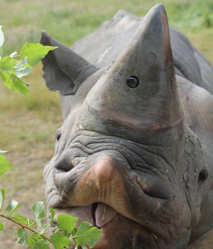 Drawn rhino battle In 607 on Pinterest Hidden