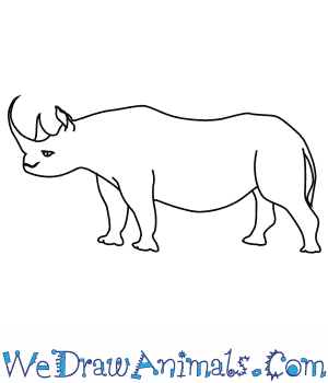 Drawn rhino rino Rhinoceros Draw How to a