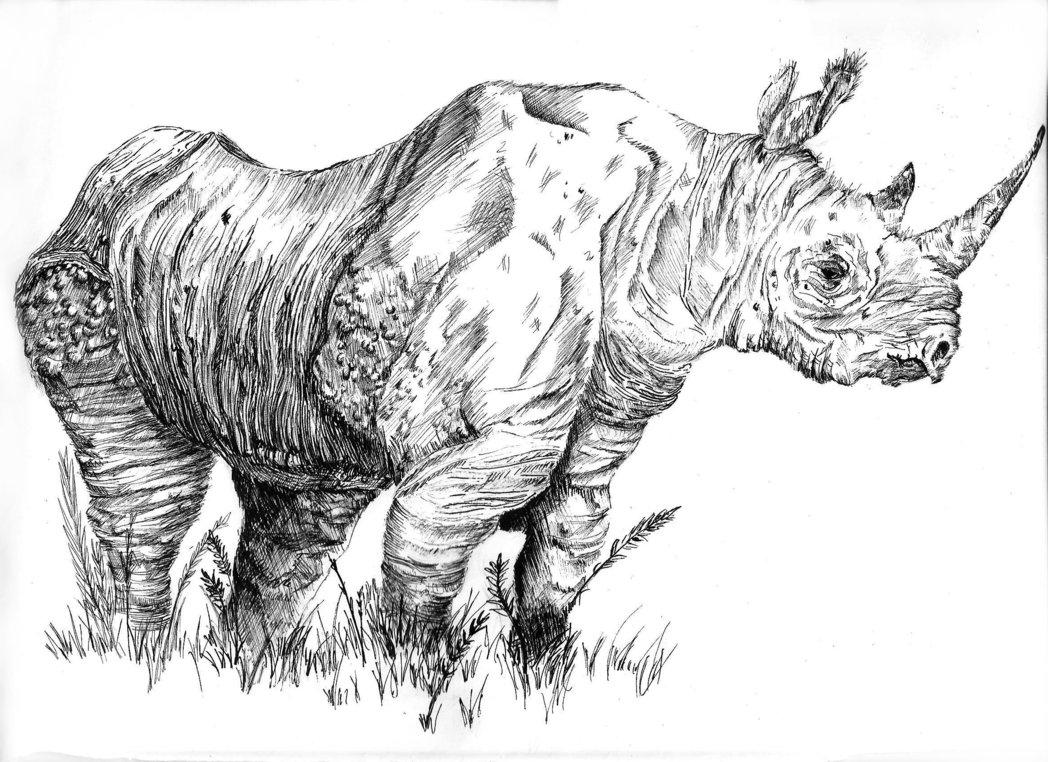 Drawn rhino black rhino Rhino Rhino Drawing Drawing Black