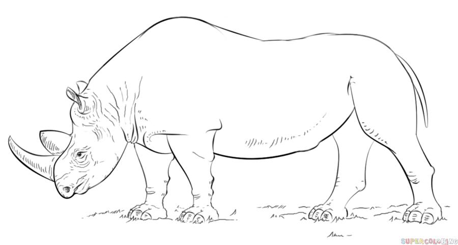 Drawn rhino black rhino Step Step realistic realistic to