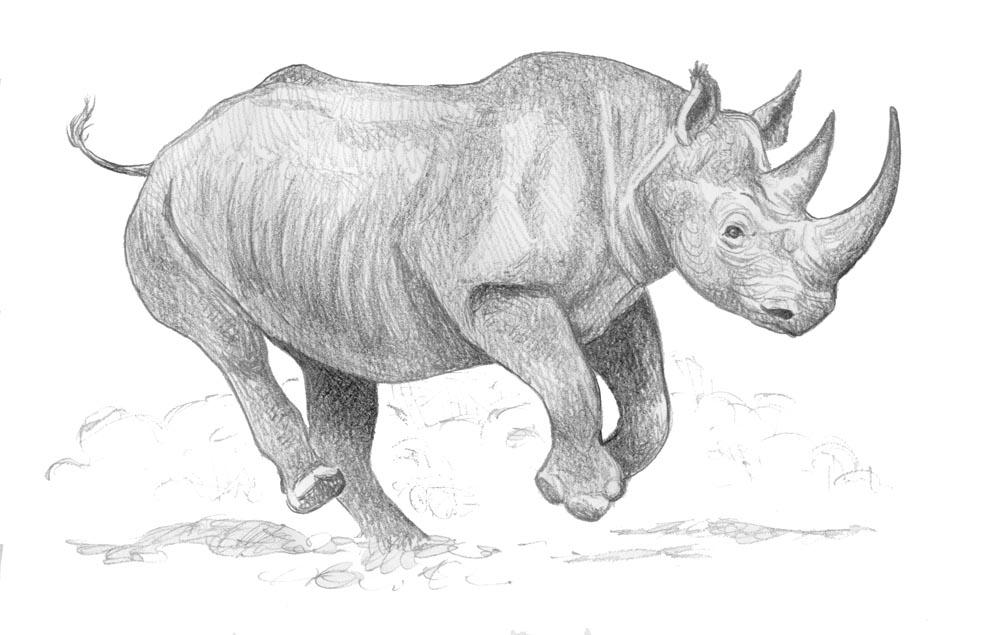 Drawn rhino black rhino On by by Charging Black