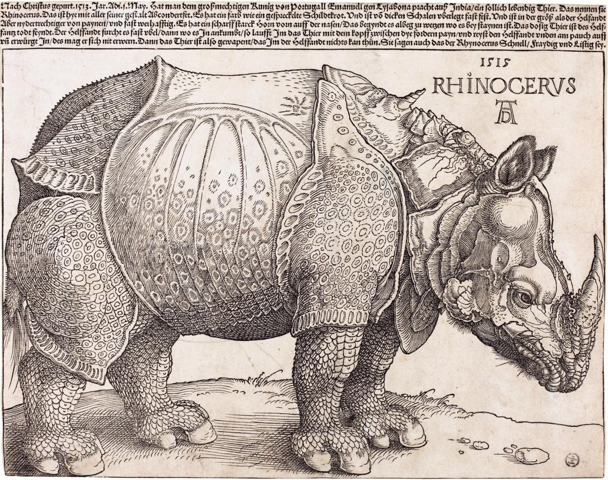 Drawn rhino durer rhino  Rhinoceros Dürer's Wikipedia