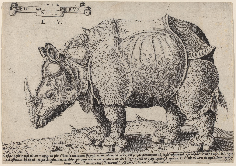 Drawn rhino durer rhino File:Enea Dürer  after Rhinoceros