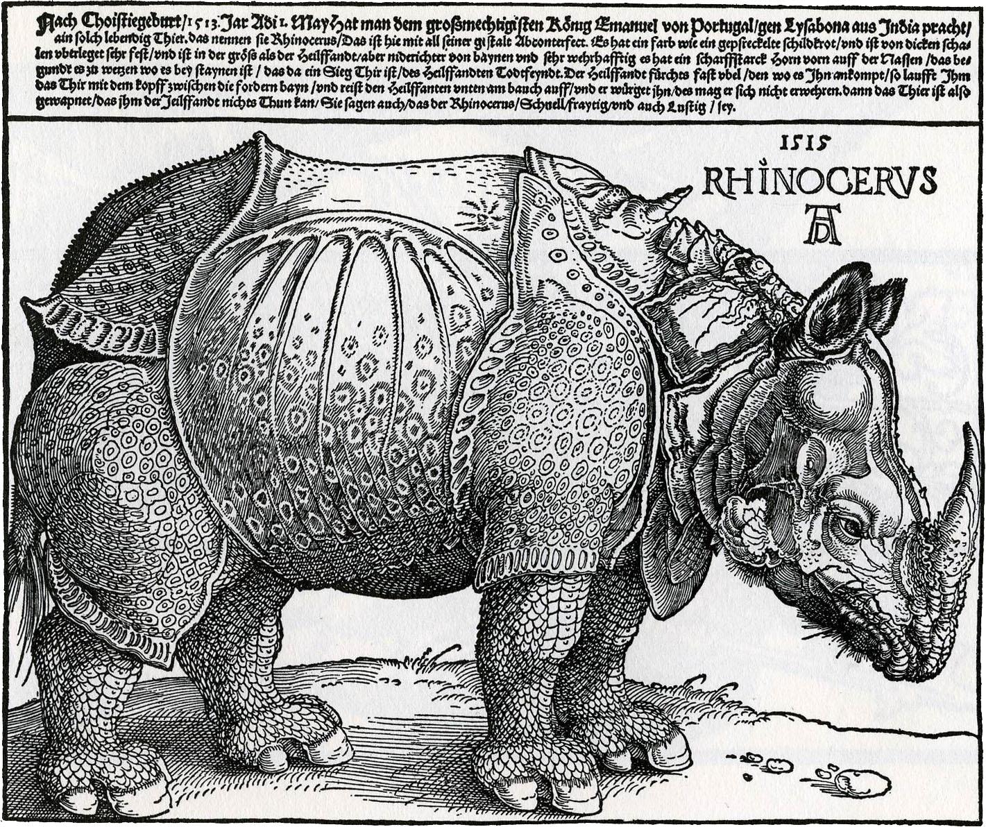 Drawn rhino durer rhino Durer the Science Renaissance engraving