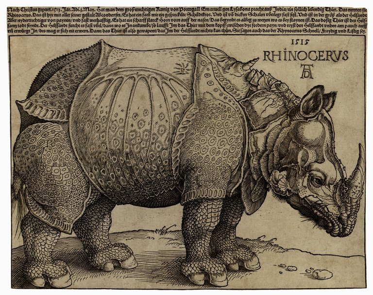 Drawn rhino durer rhino The Works  Forest: on