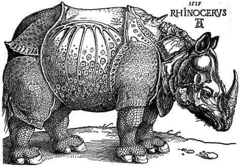 Drawn rhino durer rhino This at rhinoceros common in